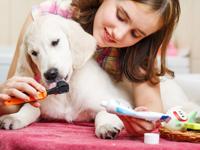 Prévention des problèmes de santé du chien
