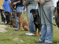 Métiers en rapport avec les chiens