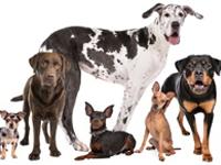 Les groupes de races canines