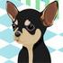 Jeu gratuit Chihuahua à la mode