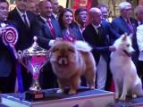 Metz, 4 et 5 juin 2016 : Championnat de France des chiens de race