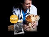 Bon plan : recevez des croquettes gratuites pour votre chien