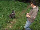 Comment se faire obéir par son chien et le rendre plus docile ?
