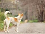Les colliers anti-fugue pour chien