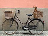Accessoires pour vélo avec chien