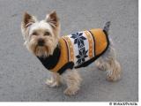 Contre le froid, un pull pour mon chien ?