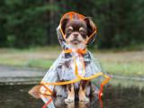 Les manteaux pour chien
