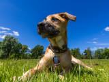 Utilités et avantages du collier gravé pour les chiens