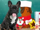 Cadeaux pour votre chien : gâtez-le avec la Woufbox de décembre !