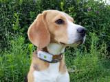 Ne plus perdre son chien : les colliers connectés pour chiens