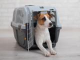 Bien choisir une cage de transport pour son chien