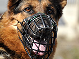Muselière pour chien