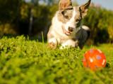 Les jouets pour chien : balles, cordes, os à mâcher...