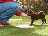 Clicker training pour chien : principe et exercices