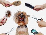 Les accessoires de toilettage pour chien: brosse, ciseaux, peigne...