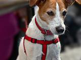 Harnais de dressage et licol pour chien