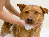 Héry : produits de soin et d'hygiène pour chien