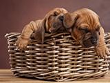 Corbeille et panier pour chien