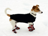 Chaussures pour chien (bottine)