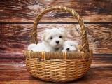 Panier, coussin, tapis, corbeille... : comment choisir le couchage de son chien ?