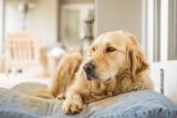 Bien choisir le matelas de son chien