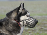 Les muselières pour chien