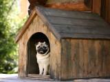 Niche pour chien : comment la choisir et y installer votre chien ?