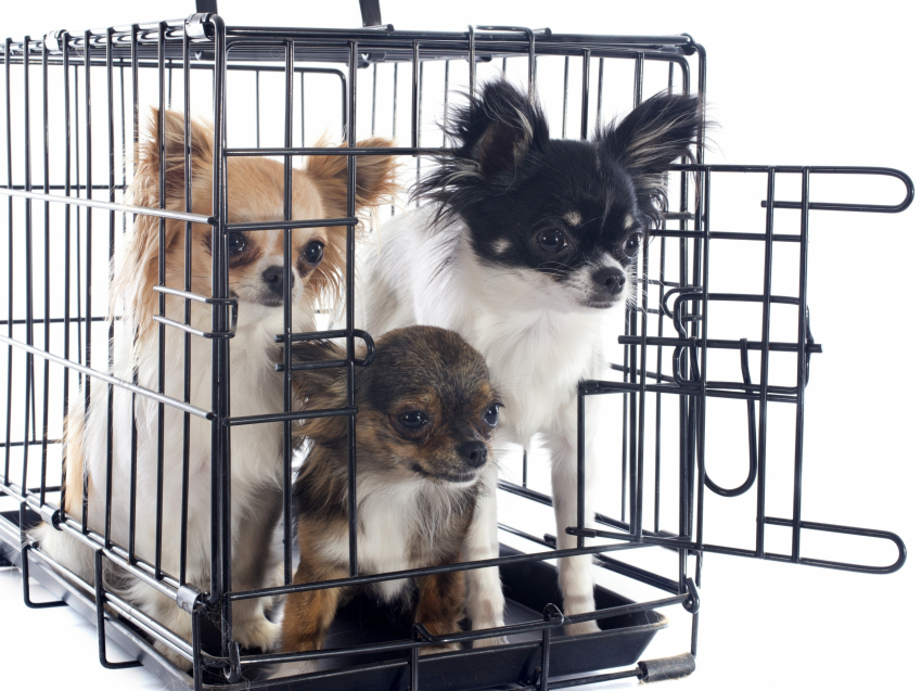 bien choisir une cage de transport pour son chien. Black Bedroom Furniture Sets. Home Design Ideas