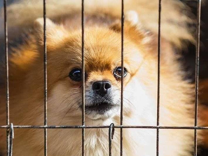 Cage D Interieur Pour Chien Mettre Son Chien En Cage Dans La Maison