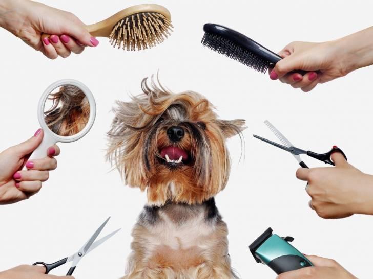 Toiletter son chien : méthode et accessoires de toilettage