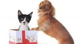 Chien et chat, attention à l'achat compulsif !