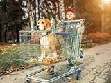 Le code de la consommation s'applique lors de l'achat d'un chien