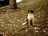 Que faire si vous trouvez un chien égaré/abandonné ?