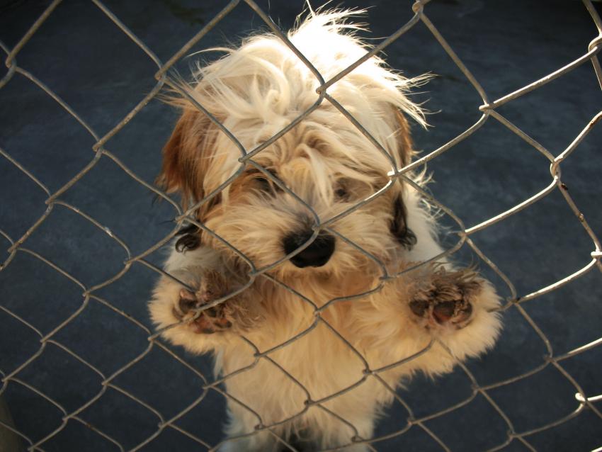 chien pour adoption