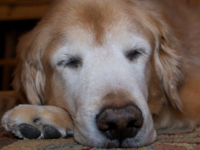 Adoption : 5 raisons d'adopter un chien âgé