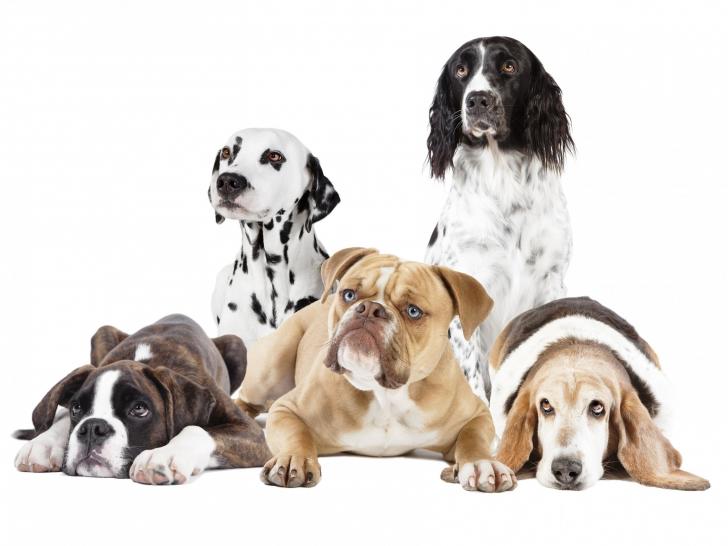 comment bien pr 233 parer l adoption d un chien