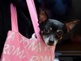 Les vices cachés et rédhibitoires lors de l'achat d'un chien ou d'un chiot