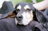 Suisse - Vous rêvez d'adopter un chien abandonné:  comment le choisir