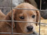 Comment se passe l'adoption d'un chien dans un refuge ?