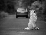 Abandonner son chien : principales causes et risques encourus