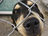 Quelques préjugés sur les chiens de refuge
