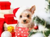Peut-on offrir un chien ou un chiot à un enfant à Noël