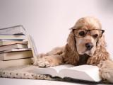 Quel est le QI de mon chien ?