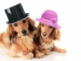 Adopter un chien: mâle ou femelle?