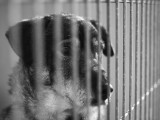 Abandon et euthanasie :