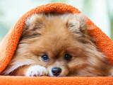 Êtes-vous prêt(e) à adopter un chien ?