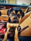Miley Cyrus : elle adopte un chiot abandonné !