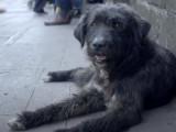A Quilpué (Chili), une initiative originale pour aider les chiens errants