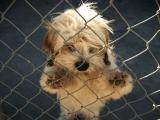 Dix raisons pour adopter un chien de refuge