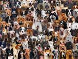 Adopter un chien : quelle race choisir ?